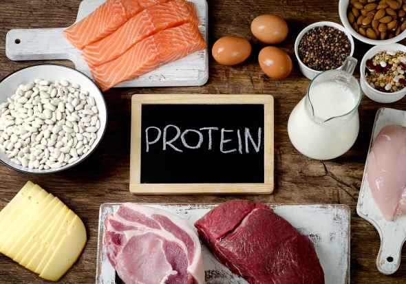 foods high in protein